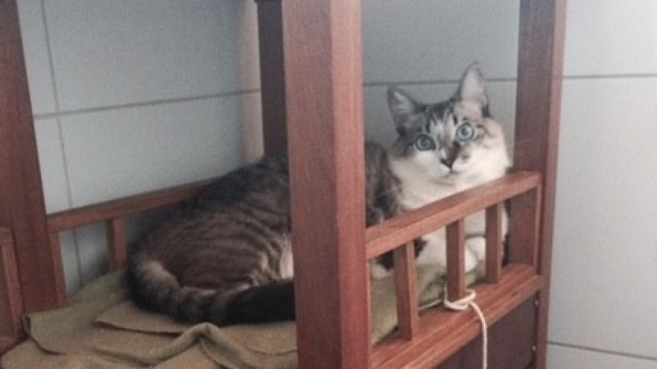 Foto: Gatos: ame-os ou deixe-os