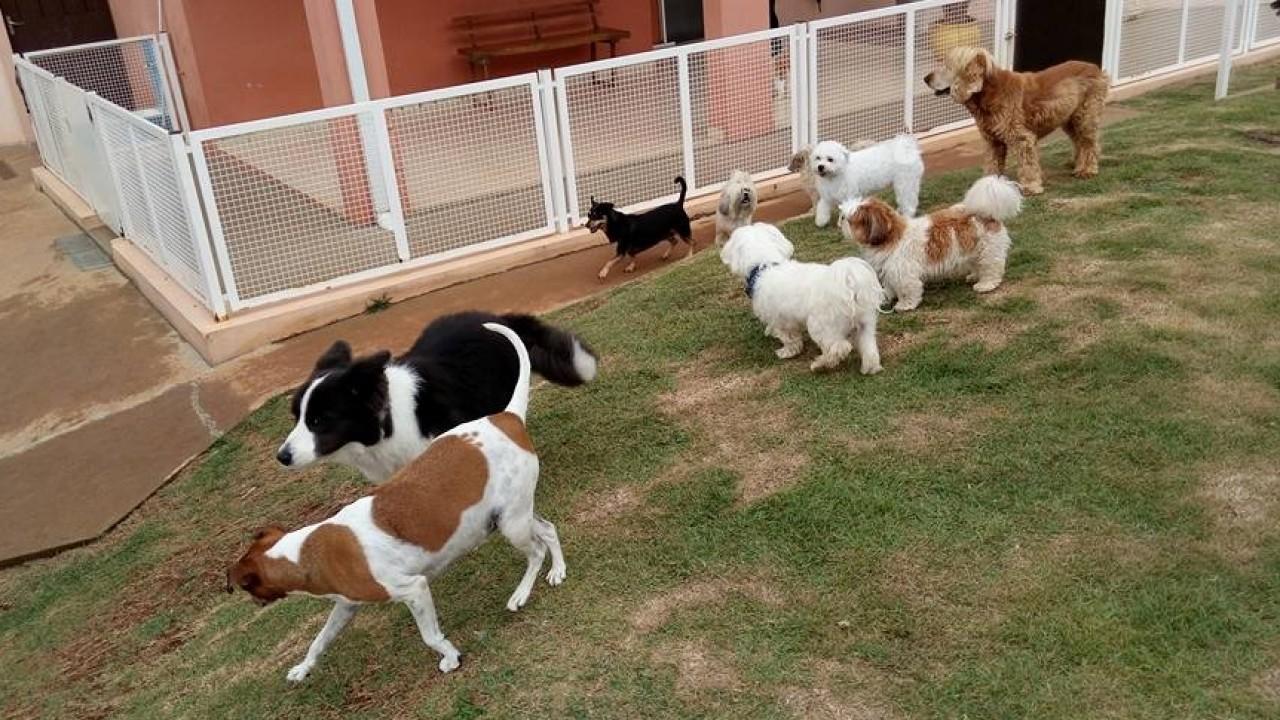 Foto: Cinco erros que cometemos com os cães