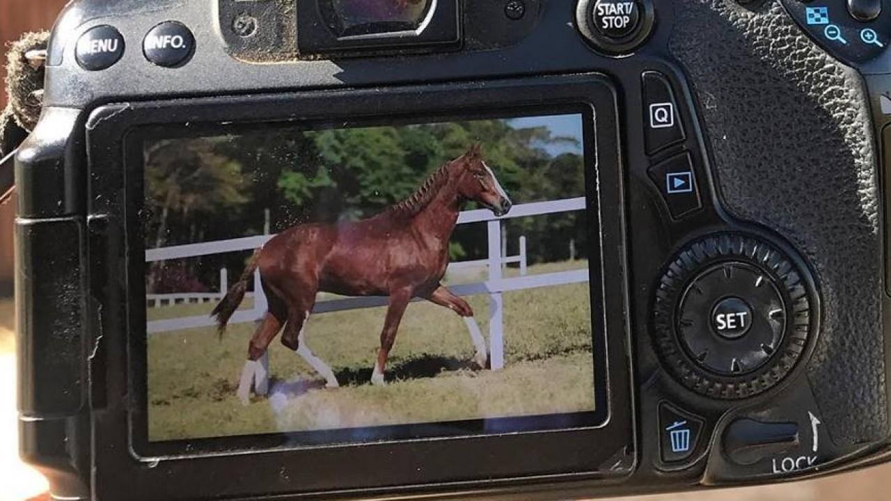 Foto: A arte de fotografar cavalos