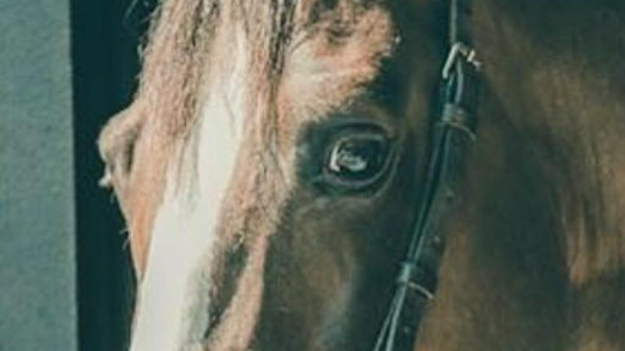 Foto: Cavalo, carinho, poder e política